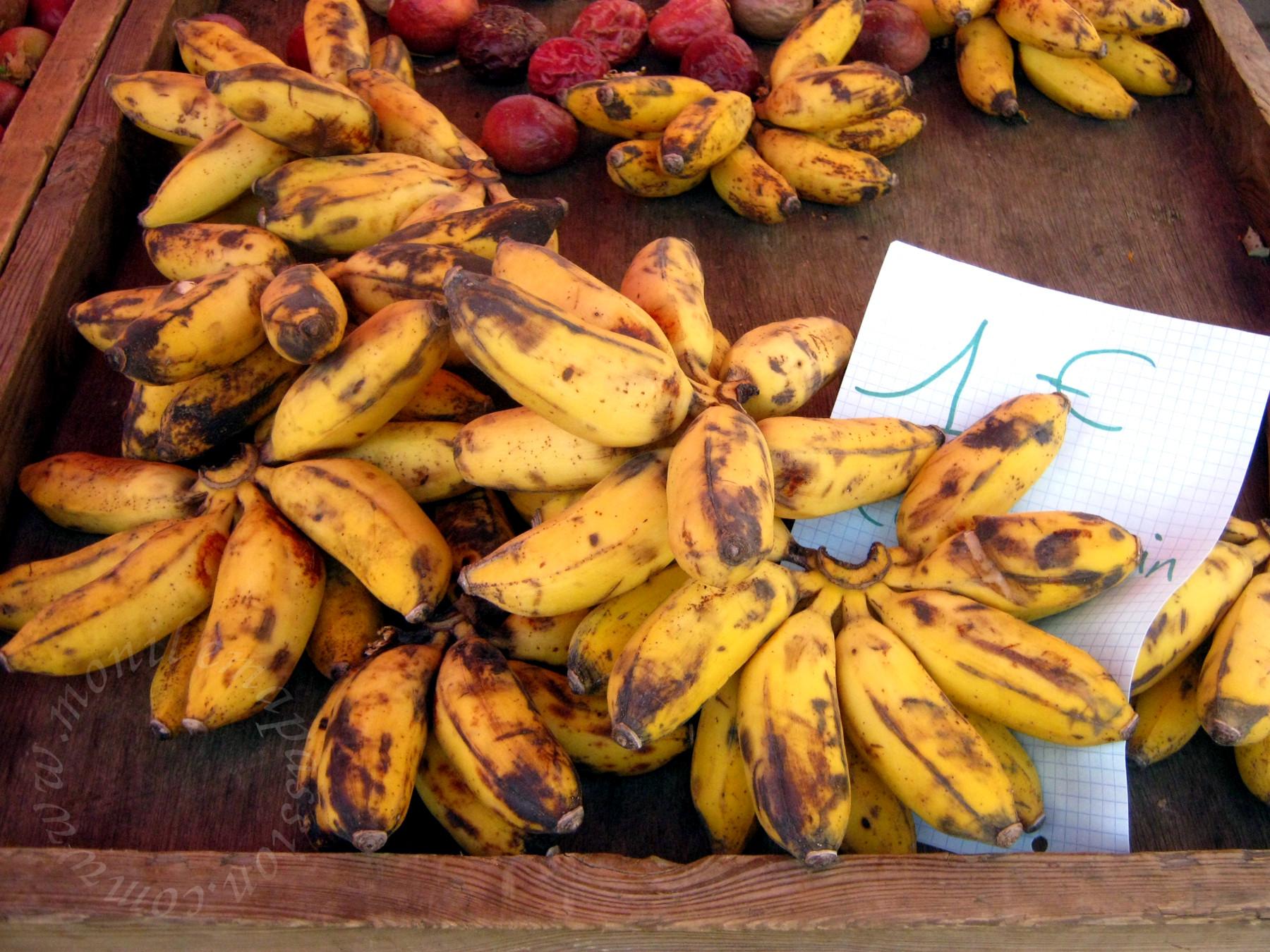 Petite bananes -- Baby bananas