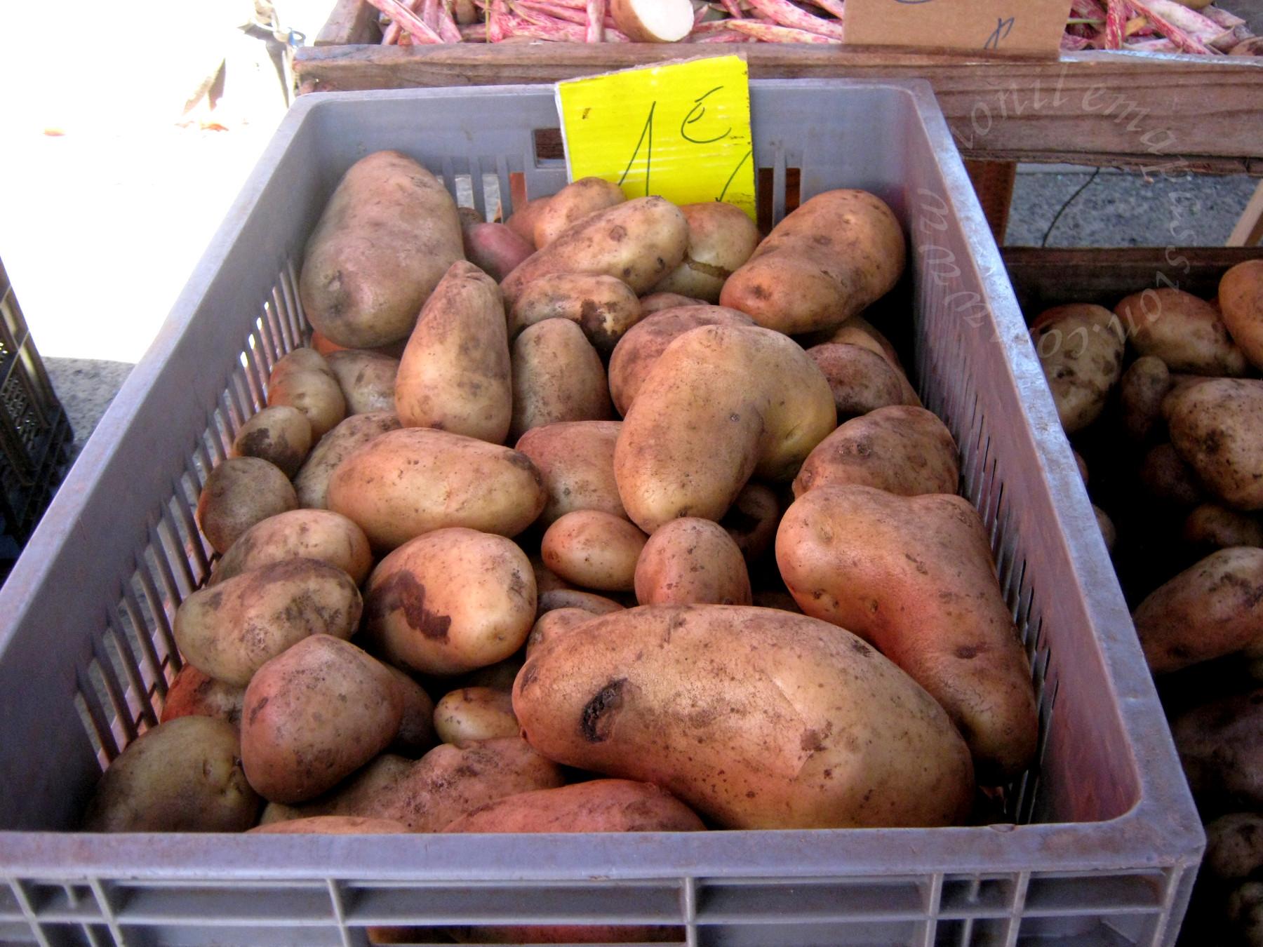 Pommes de terre -- Potatoes