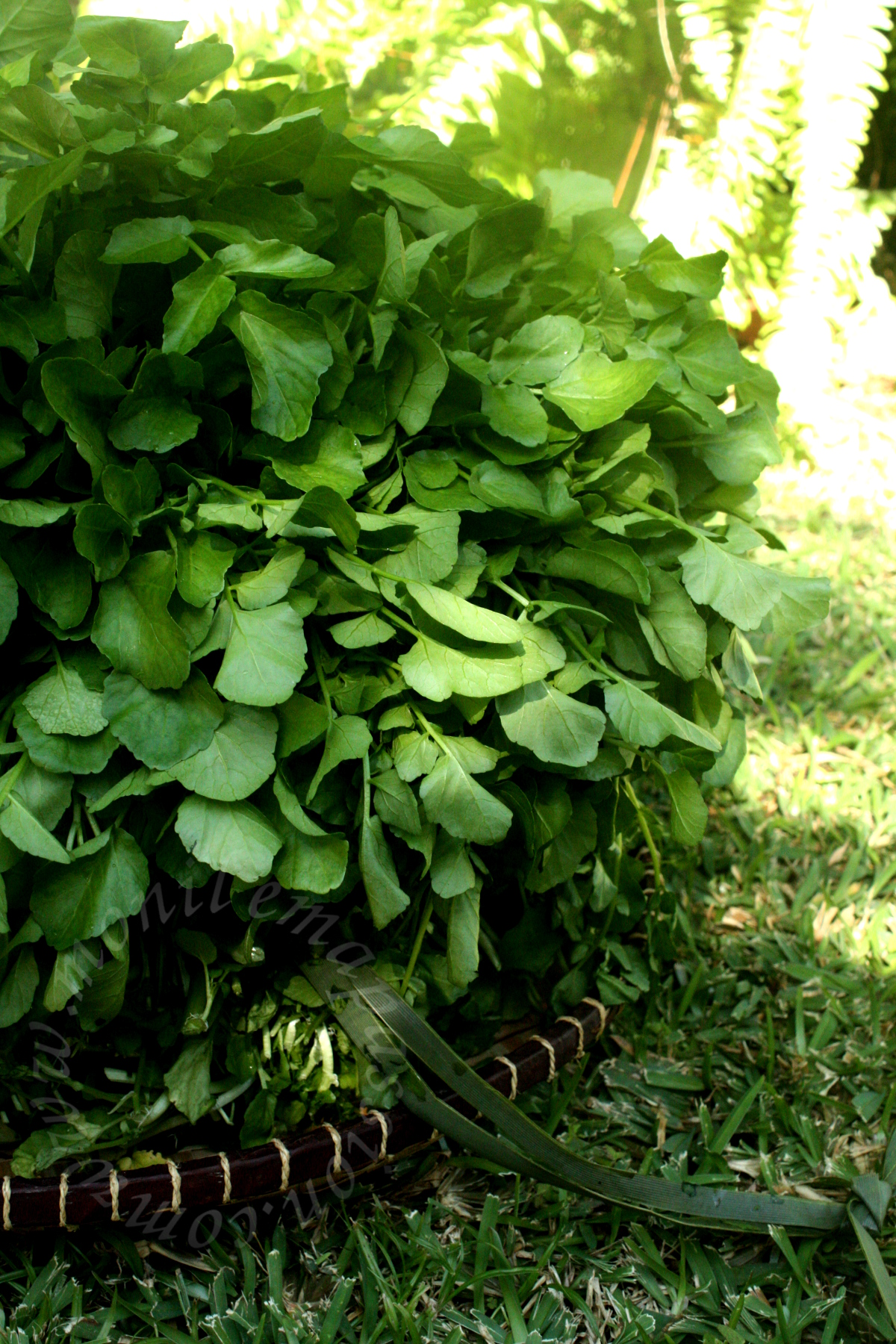 Fricassée de brèdes cresson - Watercress fricassee