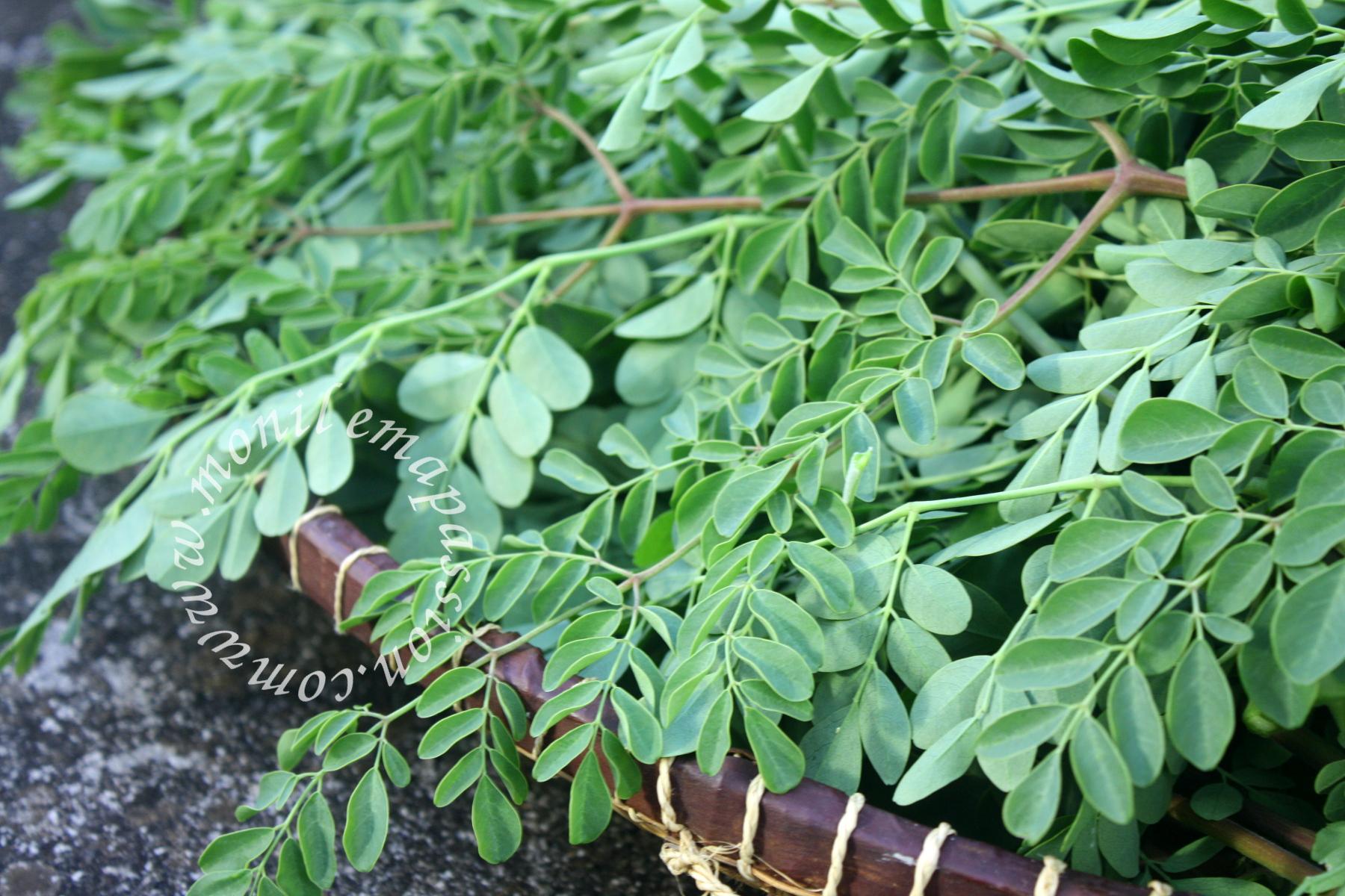 Bouillon de brèdes mourong - Moringa broth